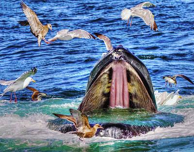 Photograph - Whale 279 by Jeff Stallard