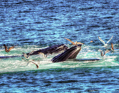 Photograph - Whale 327 by Jeff Stallard