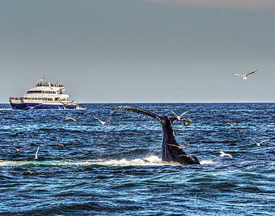Photograph - Whale 364 by Jeff Stallard