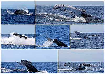 Whale Action Art Print