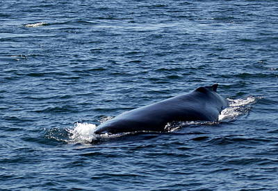 Photograph - Whale Approaches by Jeff Kurtz