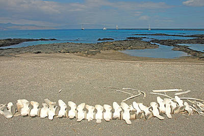 Photograph - Whale Bones by Alan Lenk