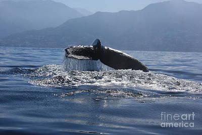 Whale Fluke Art Print