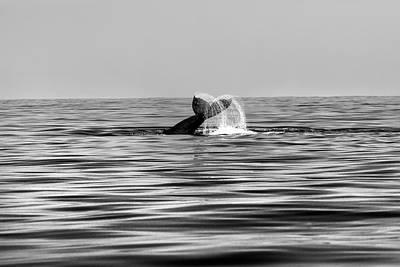 Whale Of A Tail Art Print by Sean Davey