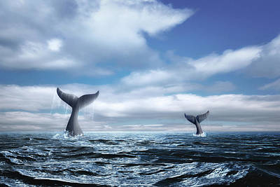 Sky Blue Photograph - Whale Of A Tail by Tom Mc Nemar