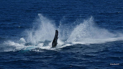 Photograph - Whale Splash 1 by Gary Crockett