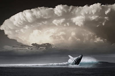 Photograph - Whale Storm by Ally White