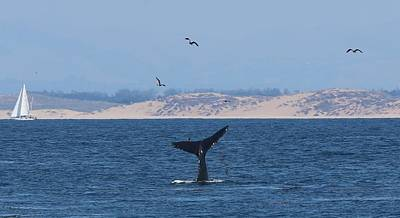 Photograph - Whale Tail - 2 by Christy Pooschke