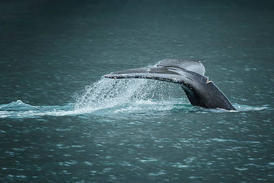 Photograph - Whale Tail by Belinda Greb
