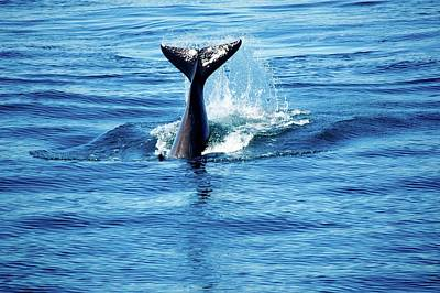 Photograph - Whale Tail by Craig Perry-Ollila