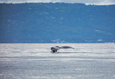 Photograph - Whale Tail by Gloria Anderson
