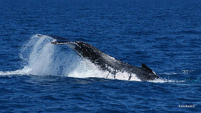 Photograph - Whale Tail Image 1 Of 1 by Gary Crockett