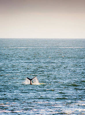 Whale Tail On Horizon Art Print by Tim Hester