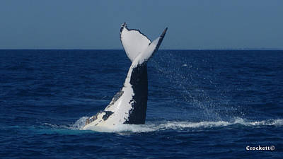 Photograph - Whale Tail Slapping by Gary Crockett