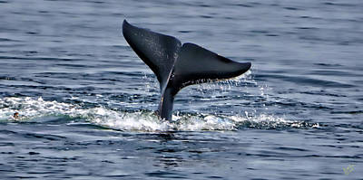 Photograph - Whale Tale Tail by Rick Lawler