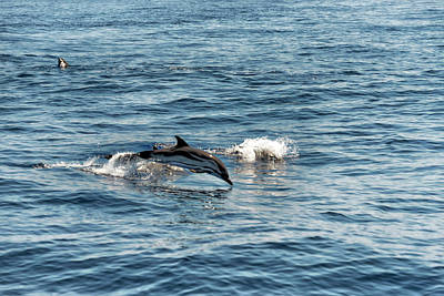 Photograph - Whale Watching And Dolphins 1 by Enrico Pelos