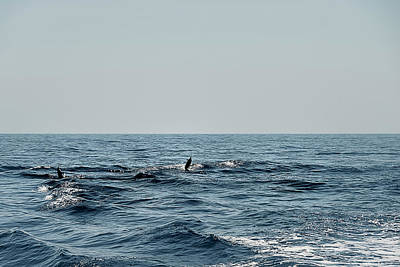 Photograph - Whale Watching And Dolphins 2 by Enrico Pelos