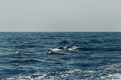 Photograph - Whale Watching And Dolphins 3 by Enrico Pelos