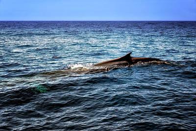 Photograph - Whale Watching Balenottera Comune 4 by Enrico Pelos