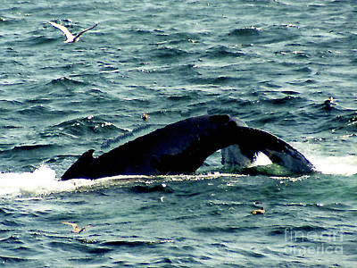 Photograph - Whale Watching - Gloucester Ma by Merton Allen