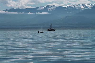 Whale Watching In The Strait Of Juan De Fuca Print by Dan Sproul