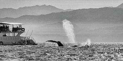 Photograph - Whale Watching by Marilyn Nieves