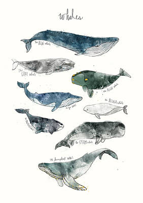 Nursery Mixed Media - Whales by Amy Hamilton