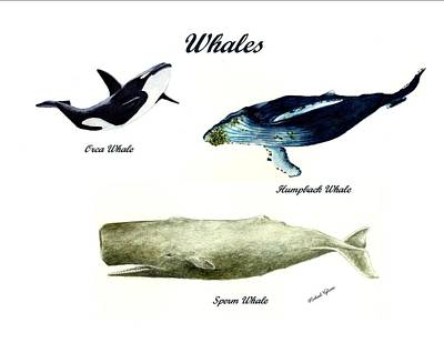 Whales Art Print by Michael Vigliotti