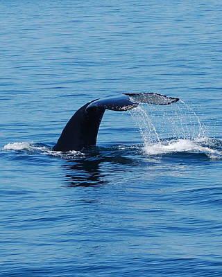 Whales Tale Art Print by Lisa Kane