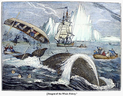 Harpoon Photograph - Whaling, 1833 by Granger
