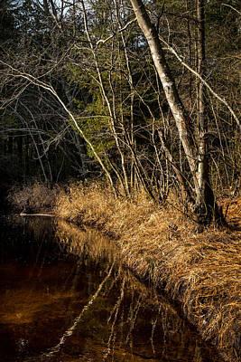 Wharton Forest Fall Art Print