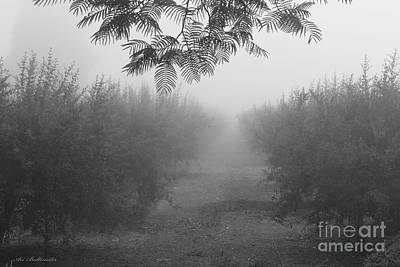 Photograph - What A Foggy Morning 02 by Arik Baltinester