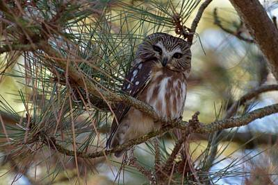 Photograph - What A Hoot by Jenny Regan