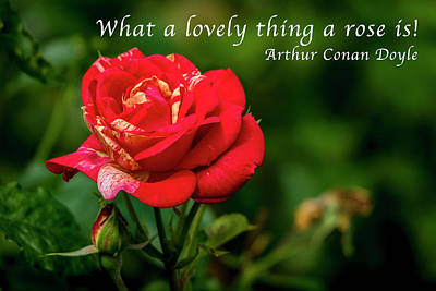 What A Lovely Thing A Rose Is Art Print