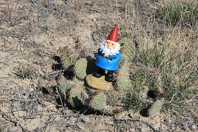Photograph - What A Prickly Situation by George Jones