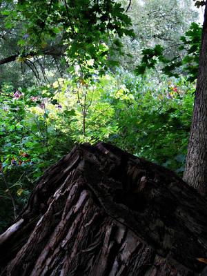 Photograph - What A Stump by Cyryn Fyrcyd