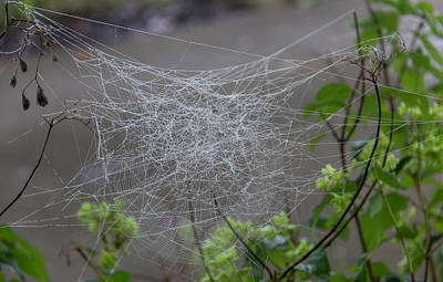 Photograph - What A Tangled Web We Weave by Teresa Mucha