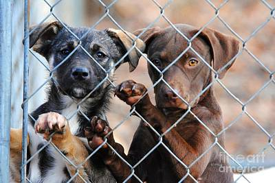 Dog Rescue Photograph - What About Us by Jai Johnson