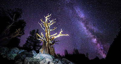 Bristlecone Photograph - What Came First? by Peter Irwindale