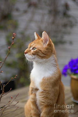 Photograph - What Did The Cat See? by Patricia Hofmeester