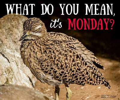 Photograph - What Do You Mean It's Monday? by Teresa Wilson