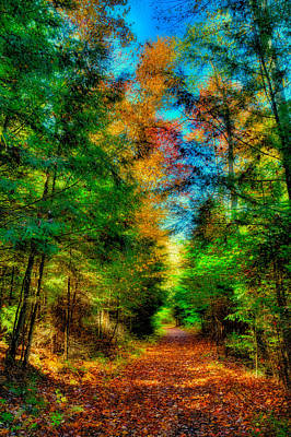 Fall Colors Photograph - What Dreams May Come 4 by David Patterson