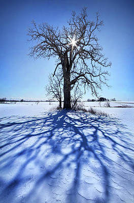 Photograph - What I Am, What I Was, What I Will Be by Phil Koch