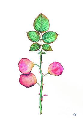 Painting - What If Roses... by Zaira Dzhaubaeva