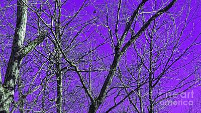 Photograph - What If The Sky Was Purple  by Rachel Hannah