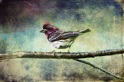 Photograph - What Lies Within You Colorful Bird by Christina VanGinkel