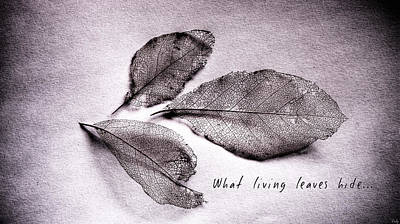 Photograph - What Living Leaves Hide by Weston Westmoreland