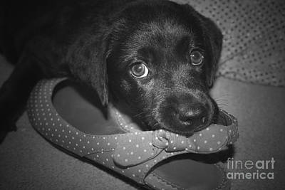 Photograph - What Shoe by Cathy Beharriell