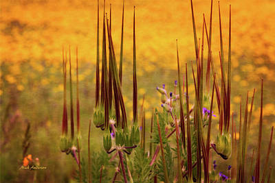 Photograph - What Some Call Weeds by Mick Anderson