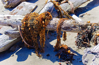 Photograph - What The Ocean Coughed Up by Adria Trail